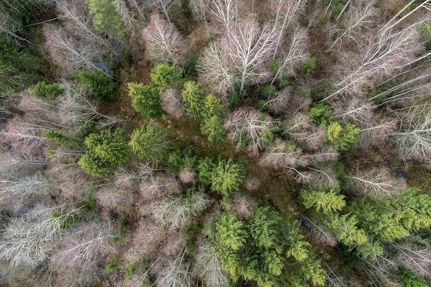 Widok z lotu ptaka na gęsty las z nagimi głębokimi jesiennymi drzewami z wysuszonymi liśćmi