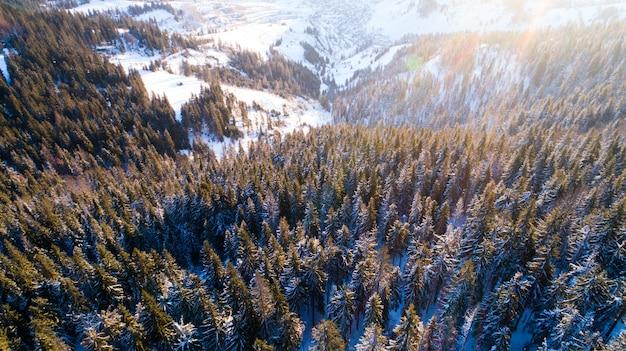 Widok z lotu ptaka na hipnotyzujący malowniczy krajobraz smukłych wysokich jodeł rosnących na zaśnieżonych wzgórzach