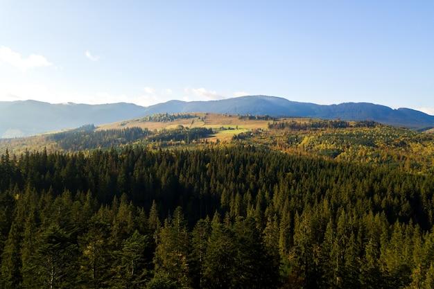 Widok z lotu ptaka na jasnozielony świerk i żółte jesienne drzewa w jesiennym lesie i odległych wysokich górach