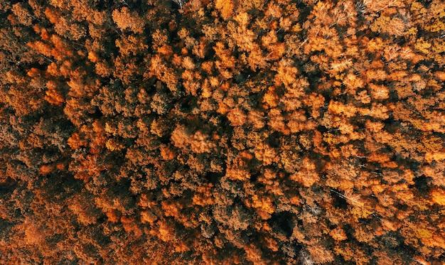 Widok z lotu ptaka na jesień las z drzewami pomarańczowymi.