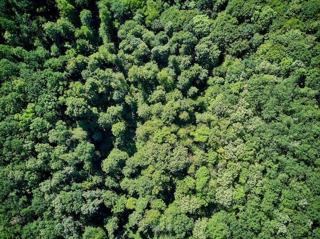 Widok z lotu ptaka na jesienne drzewa w dzikim parku we wrześniu