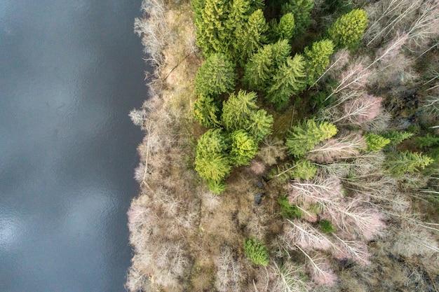 Widok z lotu ptaka na jezioro obok pięknego lasu - świetnie nadaje się do tapet