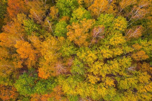 Widok z lotu ptaka na kolorowe wierzchołki drzew, litwa, jesień