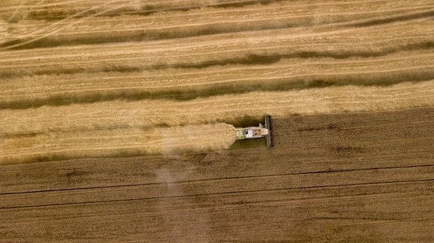 Widok z lotu ptaka na kombajn pracujący na dużym polu pszenicy