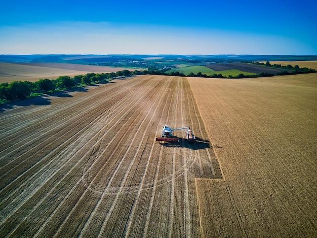 Widok z lotu ptaka na kombajn zbożowy zbiera pszenicę o zachodzie słońca. zbiór zboża, sezon upraw.