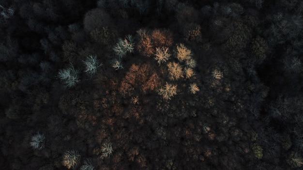Widok z lotu ptaka na krajobraz pokryty wysokimi kolorowymi drzewami jesienią