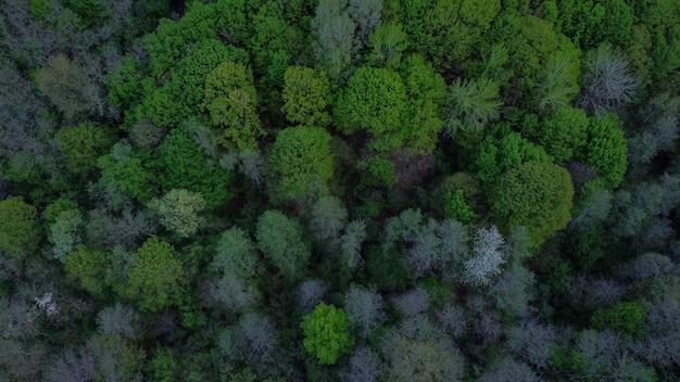 Widok z lotu ptaka na krajobraz pokryty wysokimi zielonymi drzewami