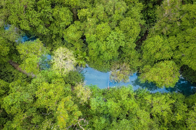 Widok z lotu ptaka na las namorzynowy tha pom klong song nam