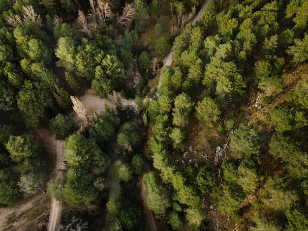 Widok z lotu ptaka na lasy