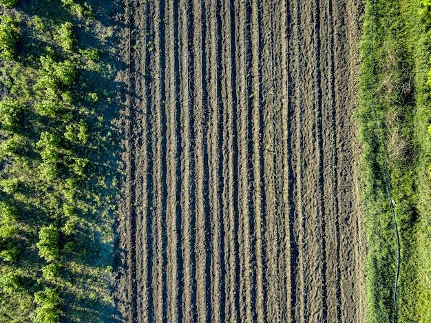 Widok z lotu ptaka na młode drzewa z systemem nawadniania kropelkowego, nowoczesne technologie uprawy. zdjęcie z drona