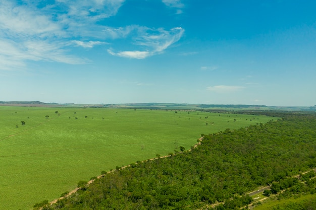 Widok z lotu ptaka na obszar z lasem i plantacją trzciny cukrowej w brazylii