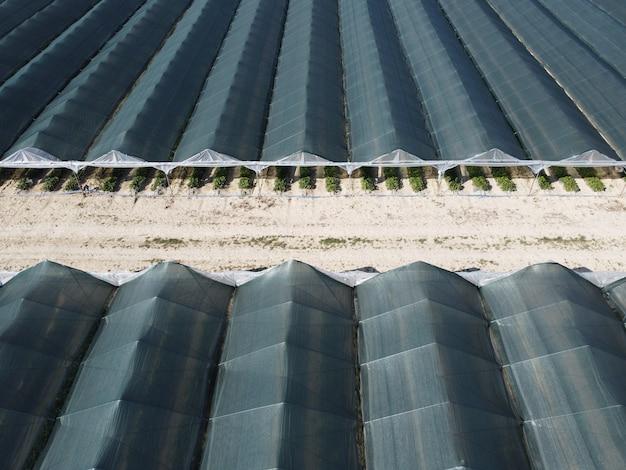 Widok z lotu ptaka na ogromne obszary szklarni do uprawy truskawek w szklarni rolnictwo