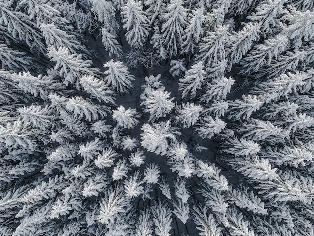 Widok z lotu ptaka na piękny zimowy krajobraz z jodłami pokrytymi śniegiem