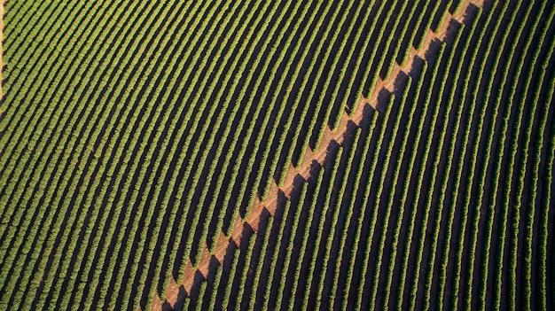 Widok z lotu ptaka na plantację kawy w stanie minas gerais - brazylia