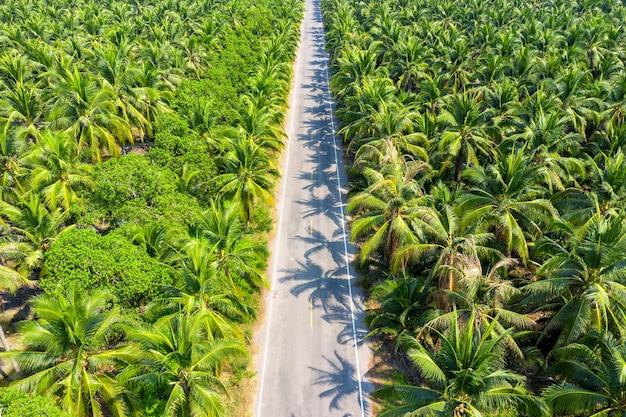 Widok z lotu ptaka na plantację palm kokosowych i drogę.