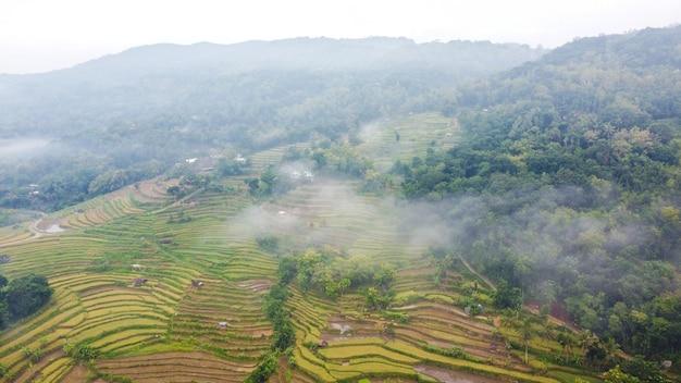 Widok z lotu ptaka na pola ryżowe w mgliste poranki