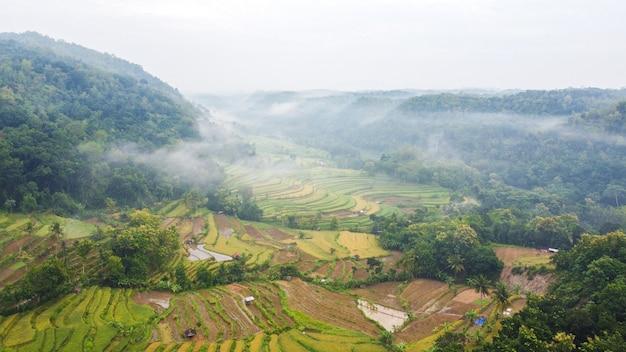 Widok z lotu ptaka na pola ryżowe wśród wzgórz z poranną mgłą