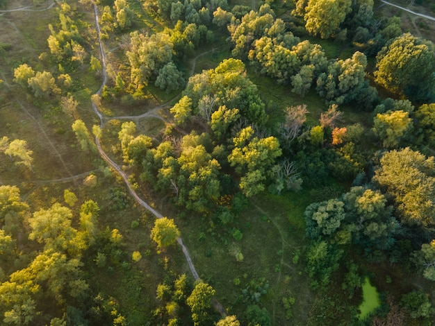 Widok z lotu ptaka na pole i drzewa