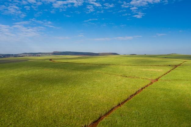 Widok z lotu ptaka na pole trzciny cukrowej z błękitne niebo i chmury