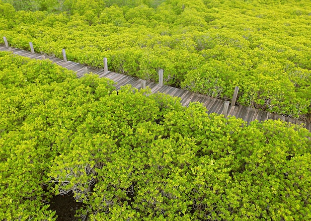 Widok z lotu ptaka na pustą drewnianą promenadę wśród lasu namorzynowego w tajlandii autorstwa drone