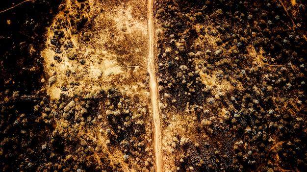 Widok z lotu ptaka na pustynną ziemię z tropikalnymi roślinami z przecinającą drogę - ciepły żółty filtr dla koncepcji zmiany klimatu - spustoszenie i piękno - krajobraz dzikiej przyrody