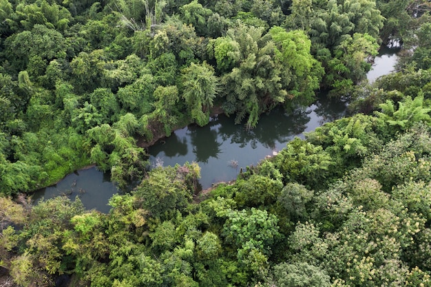Widok z lotu ptaka na rzekę w obfitym tropikalnym lesie deszczowym w parku przyrody na wsi