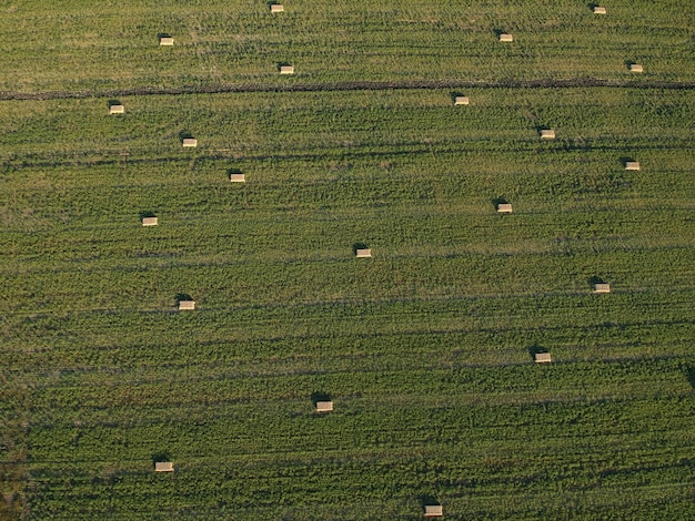 Widok z lotu ptaka na sterach siana na polu pszenicy pod niebem. pole ambrozji. fotografia dronem.