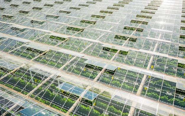 Widok z lotu ptaka na szklarnię z warzywami