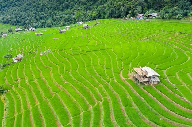 Widok z lotu ptaka na taras ryżowy w ban pa bong piang w chiang mai, tajlandia