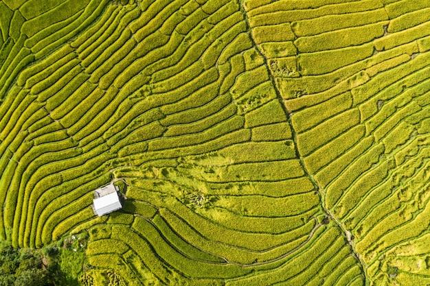 Widok z lotu ptaka na tarasy uprawiane na wzgórzach