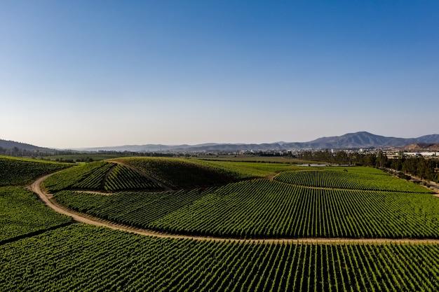 Widok z lotu ptaka na winnice w casablance, chile