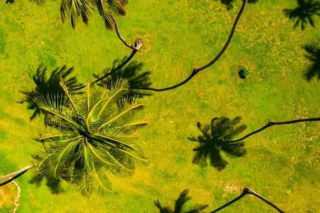 Widok z lotu ptaka na wysokie palmy