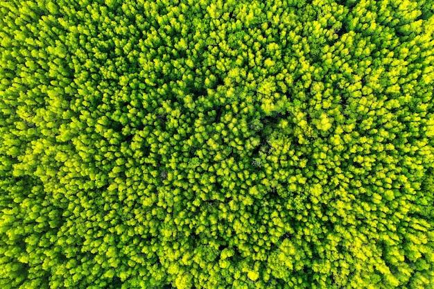 Widok z lotu ptaka na zielone drzewa w lesie.