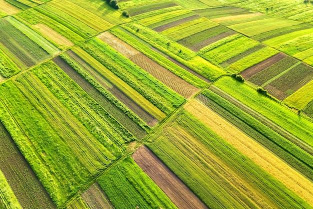 Widok z lotu ptaka na zielone pola uprawne wiosną ze świeżą roślinnością po sezonie siewu w ciepły, słoneczny dzień.