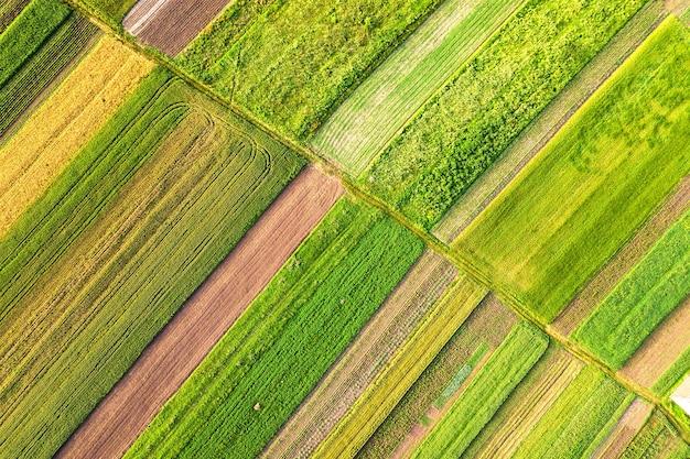 Widok z lotu ptaka na zielone pola uprawne wiosną ze świeżą roślinnością po sezonie siewu w ciepły słoneczny dzień.