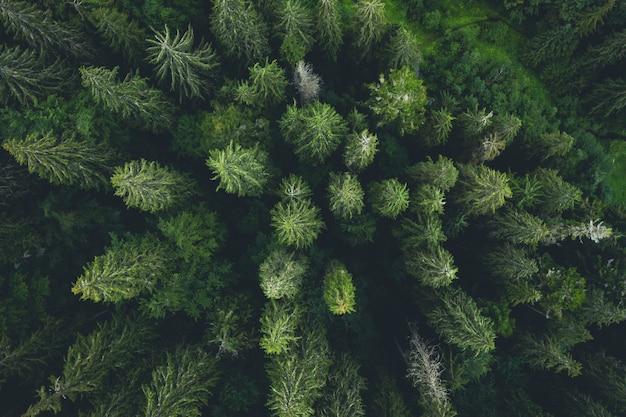 Widok z lotu ptaka na zielone szczyty drewna sosnowego, widok z góry