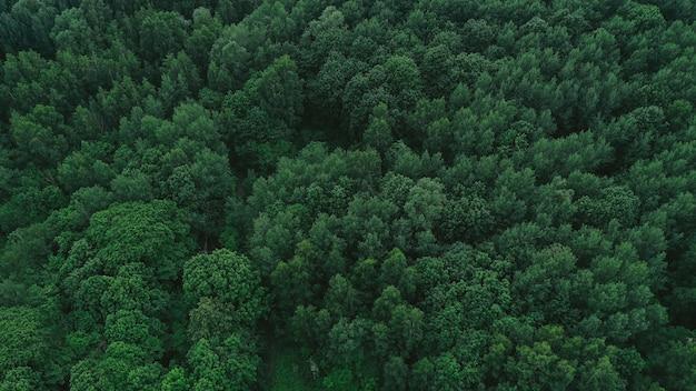 Widok z lotu ptaka na zielony las