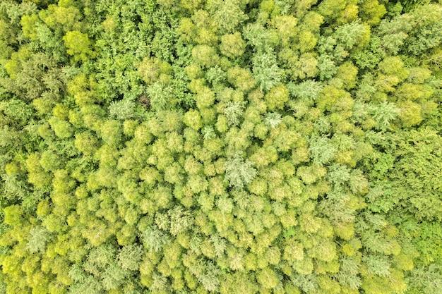 Widok z lotu ptaka na zielony letni las z baldachimami wielu świeżych drzew.