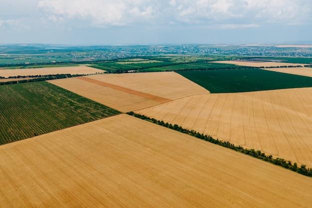 Widok z lotu ptaka na żółte pola uprawne z uprawami pszenicy na jasnym su...