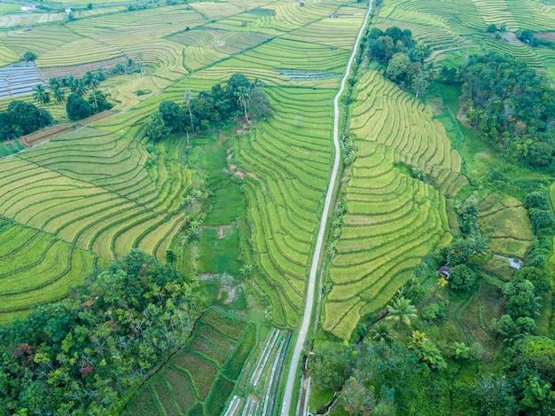 Widok z lotu ptaka piękna zielone pola ryżowe z lasem w północnej bengkulu