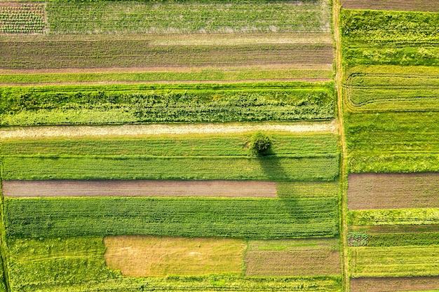 Widok z lotu ptaka pojedynczego drzewa rosnącego samotnie na zielonych polach uprawnych wiosną ze świeżą roślinnością po sezonie siewu w ciepły, słoneczny dzień.