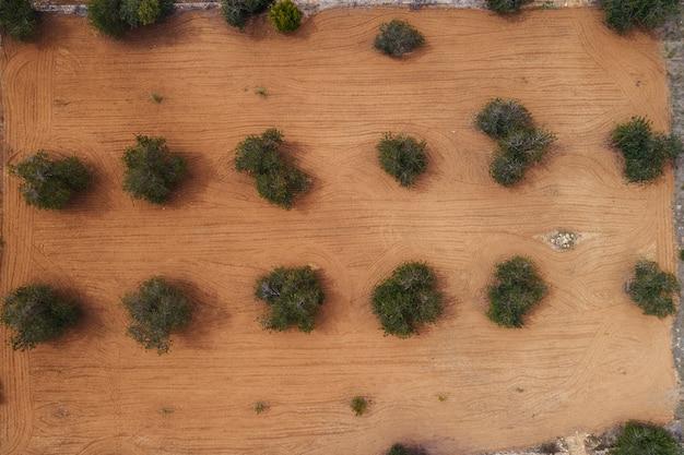 Widok z lotu ptaka pole drzewa oliwne