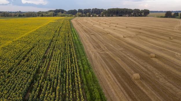 Widok z lotu ptaka, pole pszenicy z bel słomy po zbiorach. uprawa słonecznika. krajobraz małego miasteczka