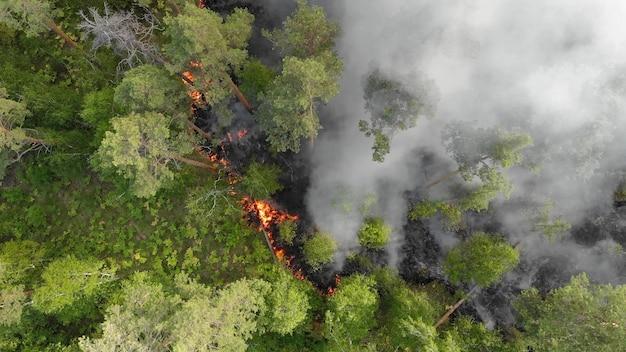 Widok z lotu ptaka pożary lasów płoną gwałtownie.
