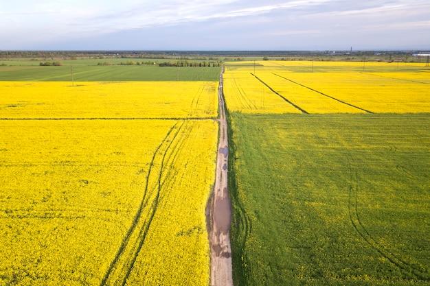 Widok z lotu ptaka prosta zmielona droga z podeszczowymi kałużami w zielonych polach z kwitnącymi rapeseed roślinami na niebieskie niebo kopii przestrzeni. fotografia dronów.