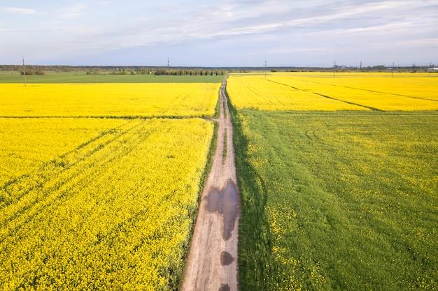 Widok z lotu ptaka prosta zmielona droga z podeszczowymi kałużami w zielonych polach z kwitnącymi rapeseed roślinami na niebieskie niebo kopii przestrzeni tle. fotografia dronów.