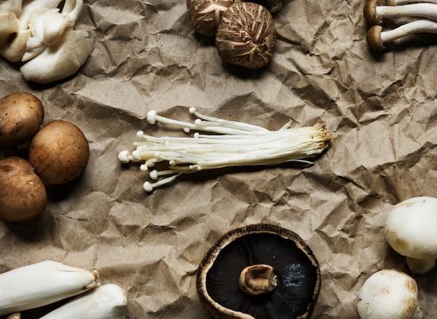 Widok z lotu ptaka różnorodna świeża organicznie pieczarka setu kolekcja