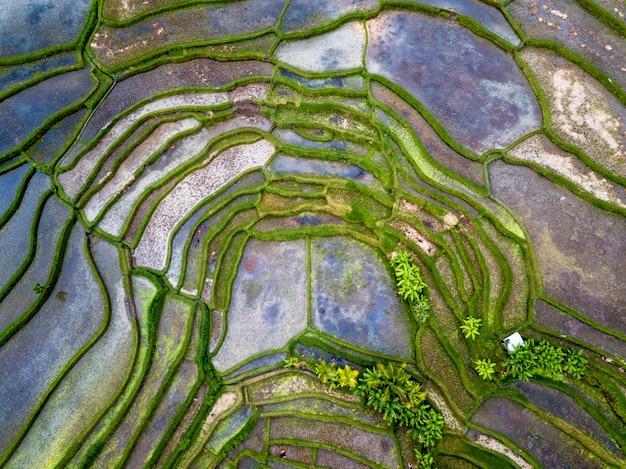 Widok z lotu ptaka ryżowi tarasy w bali
