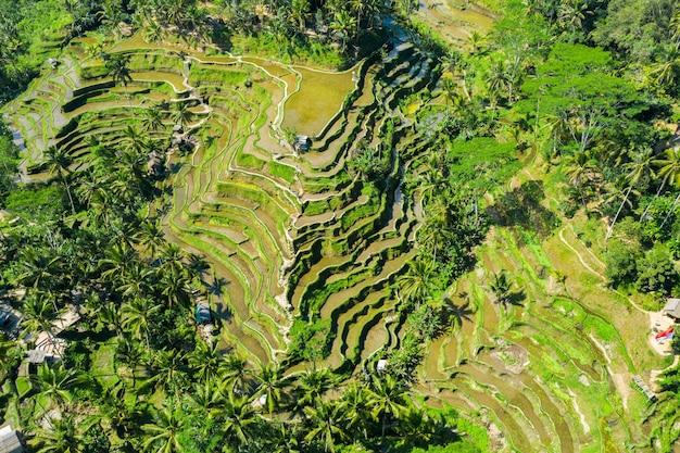 Widok z lotu ptaka tarasowych pól ryżowych bali, indonezja