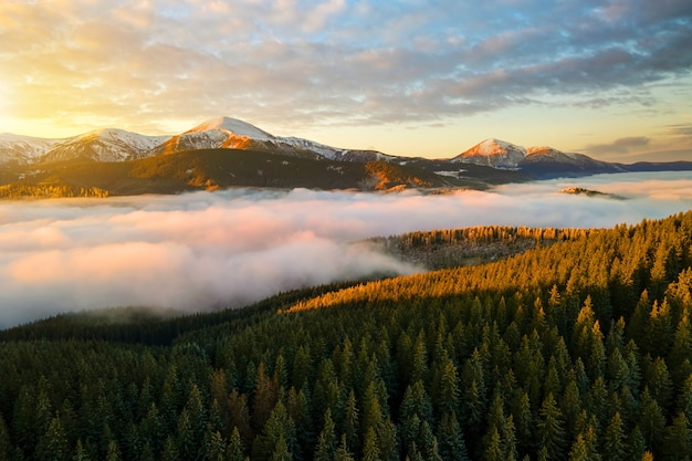 Widok z lotu ptaka tętniącego życiem wschodu słońca nad górskimi wzgórzami karpat pokrytych wiecznie zielonym lasem świerkowym jesienią.